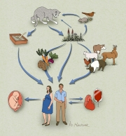 Cycle of Toxoplasmosis